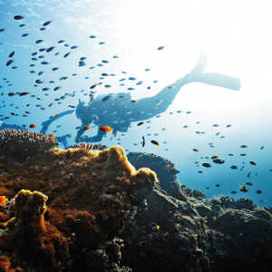 1 Day Great Barrier Reef Tour