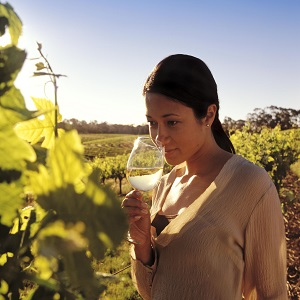 Barossa Valley Winery Tour