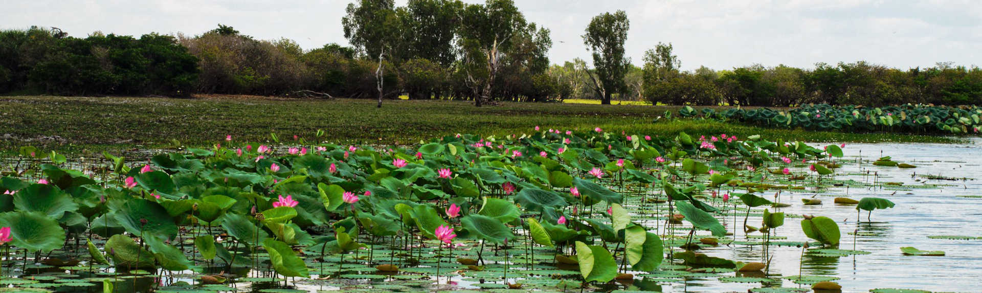 What is the best way to see Kakadu?